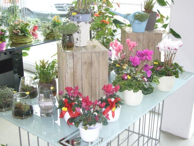 garten freizeit das tolle gartencenter neuwied heimbach weis fachberatung pflanzen. Black Bedroom Furniture Sets. Home Design Ideas